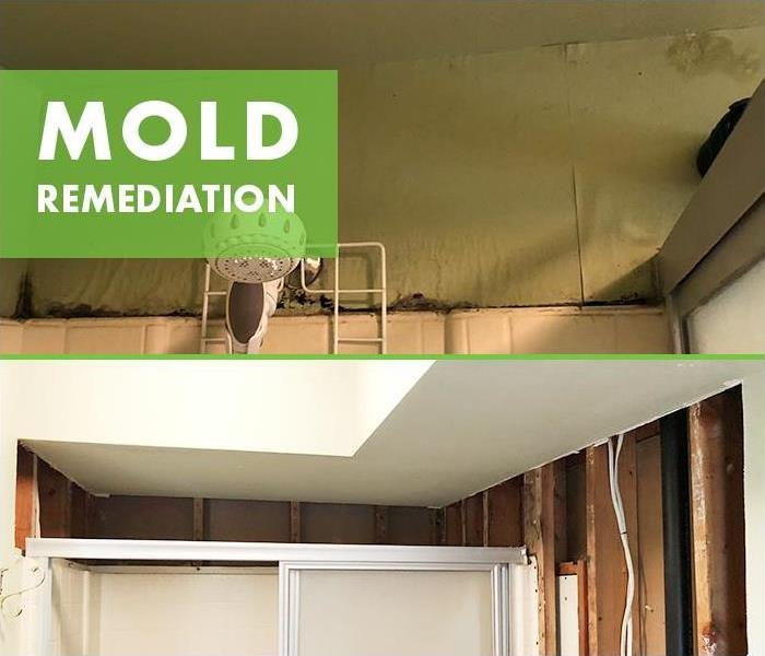 If You See Mold