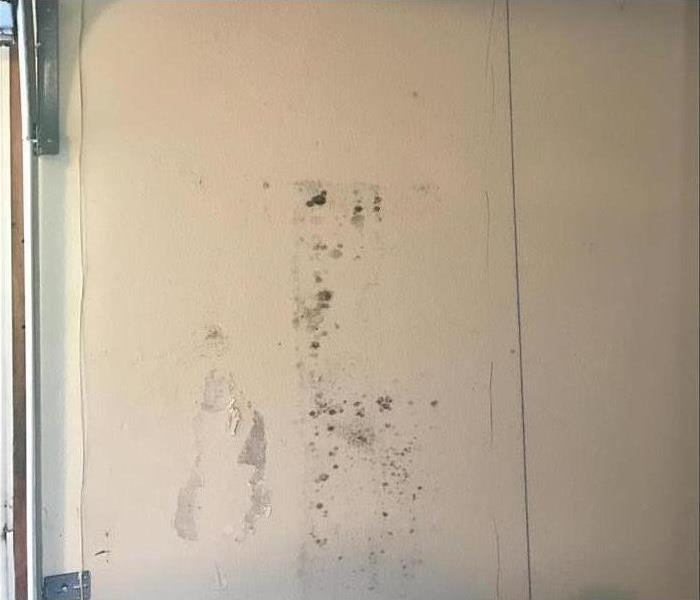 Mold Remediation Assess Mold Damage in 4 Steps