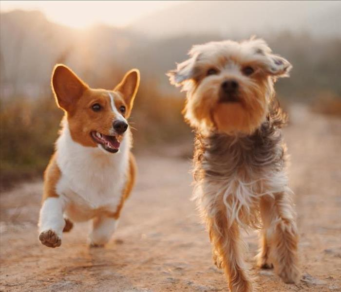 Image of dogs running outside